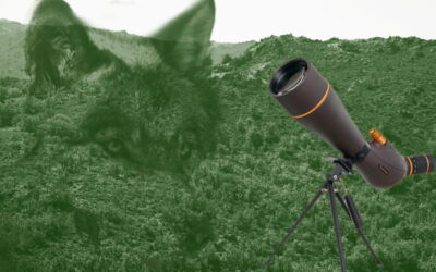 Dónde Observar Al Lobo Ibérico