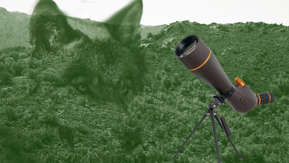 Telescopio Terrestre Observación Lobo Ibérico
